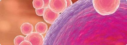 精子、卵子、胚胎冷冻