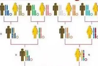 专业:生出来的宝宝到底遗传谁的智商和相貌?