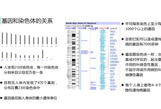 好孕时光第八期:流产与基因和染色体的关系