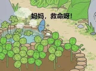 你想养个蛙,你想有个家,你照顾好你的蝌蚪了吗?(上)