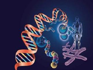 (ICSI)技术的精子核蛋白成熟率