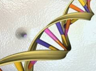 SHIMS方法测定基因组提高试管婴儿成功率