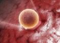 美国试管婴儿捐卵:冻卵好还是鲜卵好?