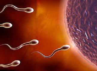 美国试管婴儿男方取精流程