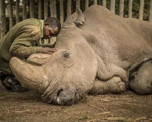 试管婴儿成功打破次元壁,承担起拯救濒危动物的大任!